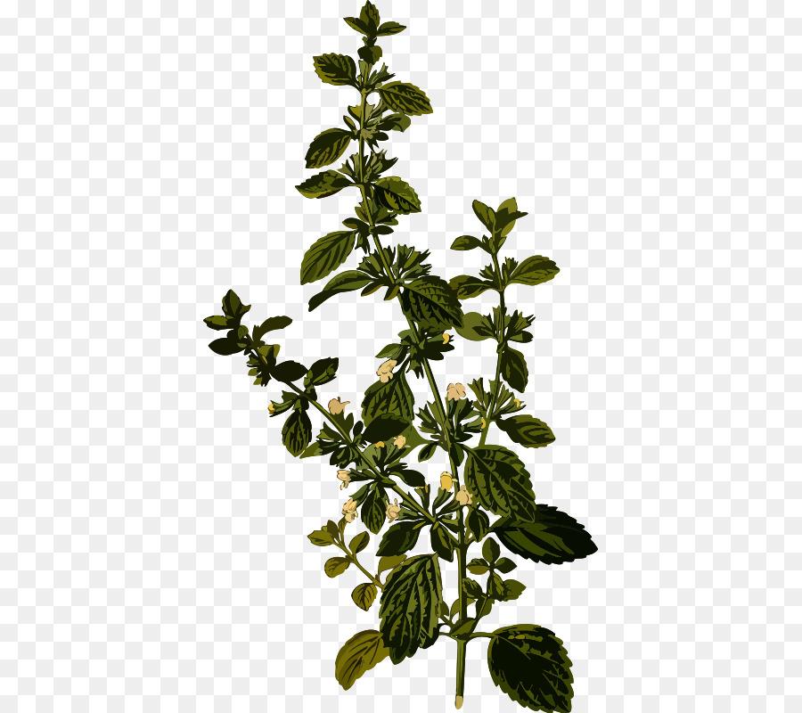 Free transparent lemon stem leaf clipart jpg royalty free library Lemon Leaf png download - 443*800 - Free Transparent Lemon Balm png ... jpg royalty free library