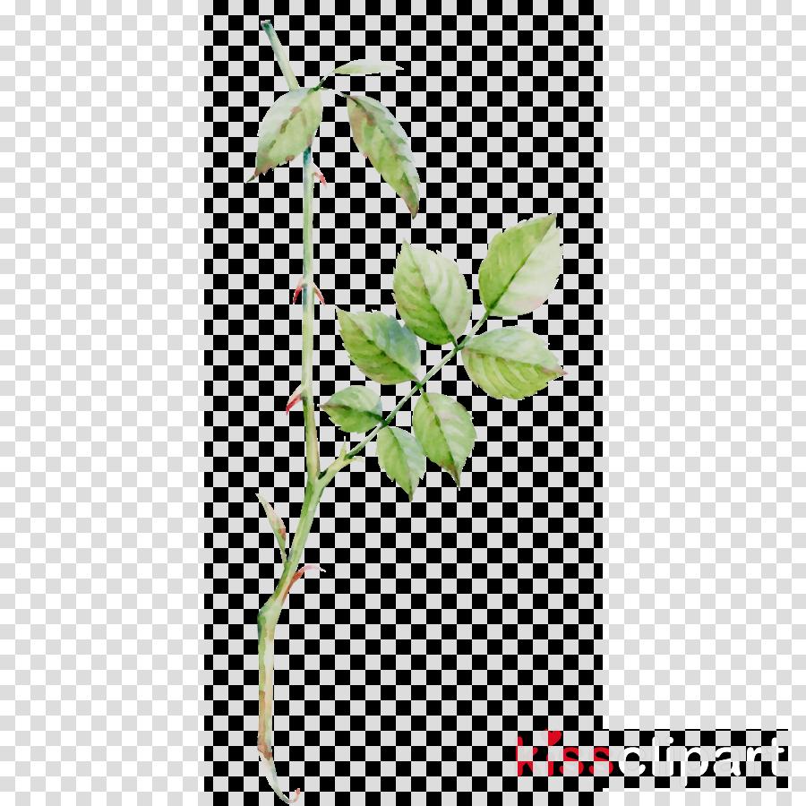 Free transparent lemon stem leaf clipart clip free download Flower, Plant, Leaf, transparent png image & clipart free download clip free download