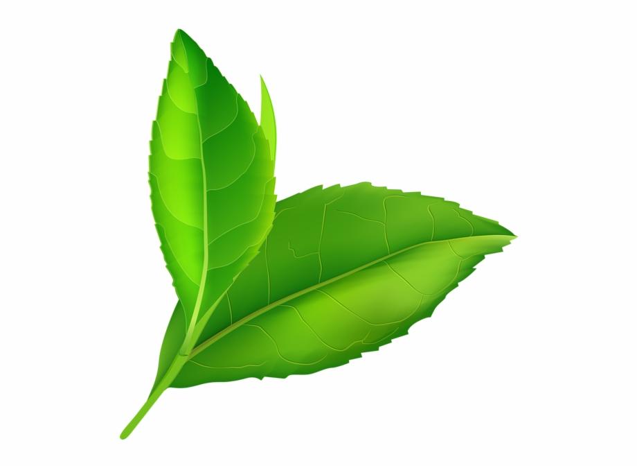 Free transparent lemon stem leaf clipart banner black and white stock Green Leaf Clip Art Png - Green Leaves Transparent Png - transparent ... banner black and white stock