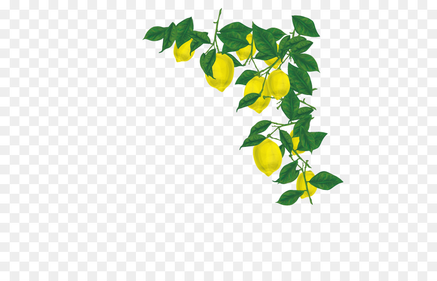 Free transparent lemon stem leaf clipart clipart free download Green Leaf Background png download - 567*567 - Free Transparent ... clipart free download