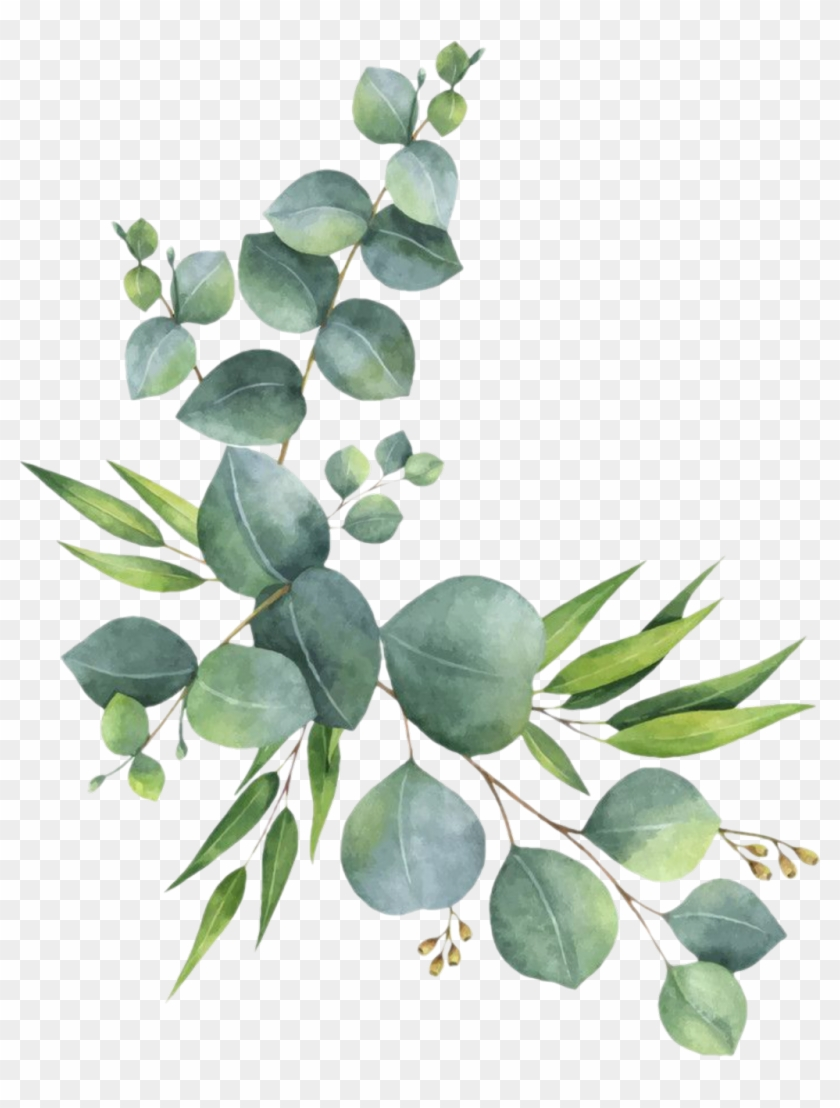 Free transparent lemon stem leaf clipart clip black and white library branch #leaves #florals #branches #zweig #watercolor - Eucalyptus ... clip black and white library