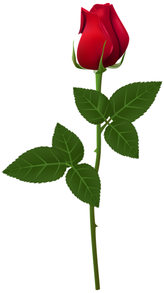 Free transparent new york rose coloring page clipart image transparent download Pin by SLGudiel on Wallpapers and more | Flowers, Red roses, Single ... image transparent download