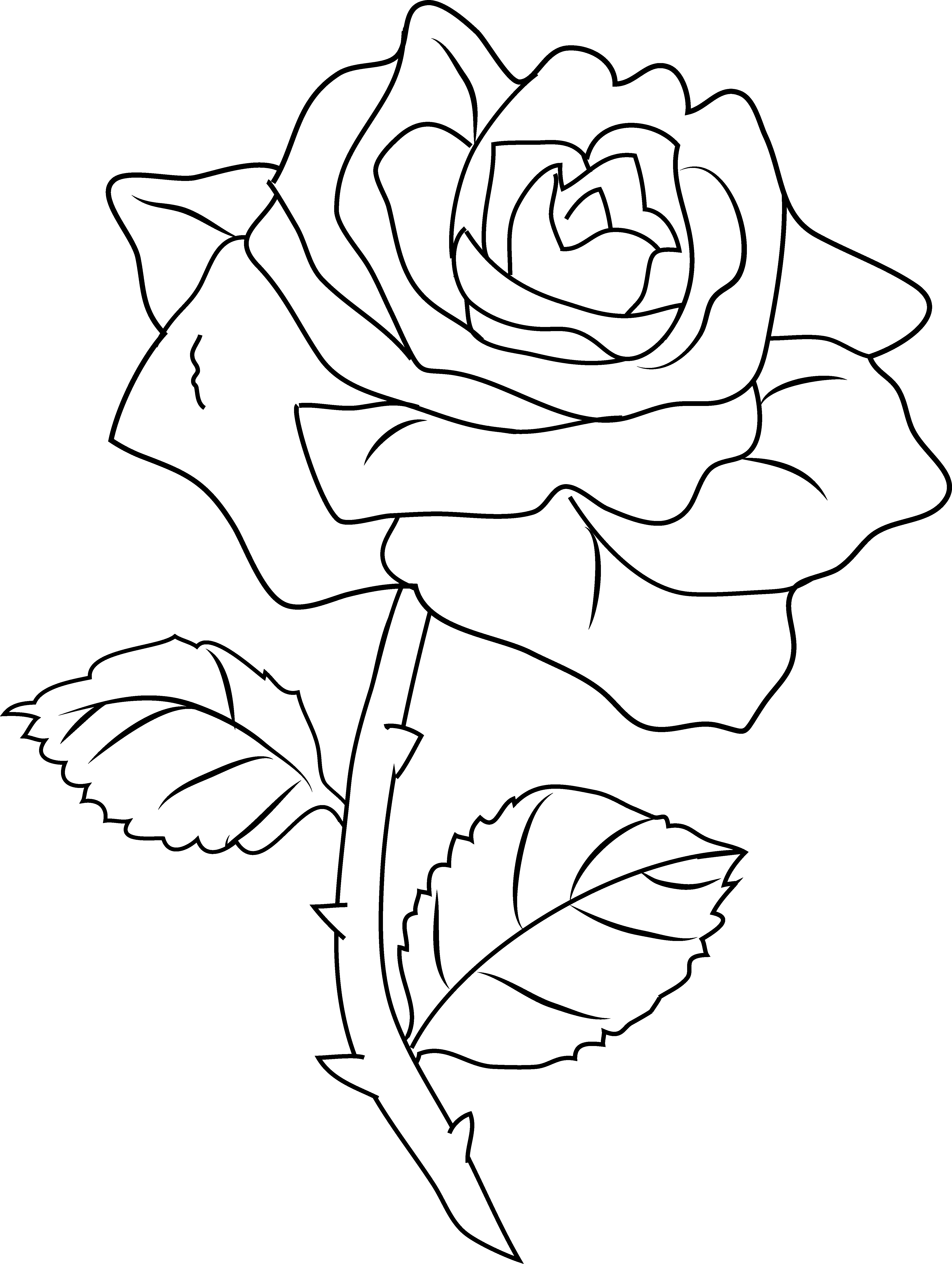 Free transparent new york rose coloring page clipart clip art transparent Free Line Drawing Rose, Download Free Clip Art, Free Clip Art on ... clip art transparent
