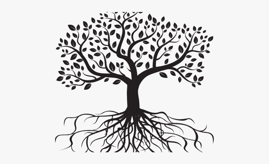 Black and white tree with leaves and roots clipart vector freeuse stock Drawn Roots Transparent Leaf - Tree Roots Drawing #487929 - Free ... vector freeuse stock