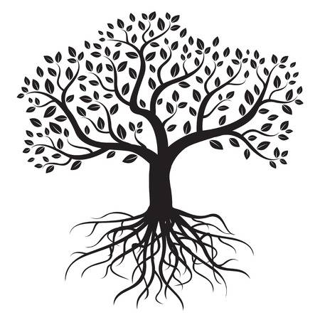 Tree clipart black and white with roots graphic transparent stock Tree with roots clipart black and white » Clipart Station graphic transparent stock