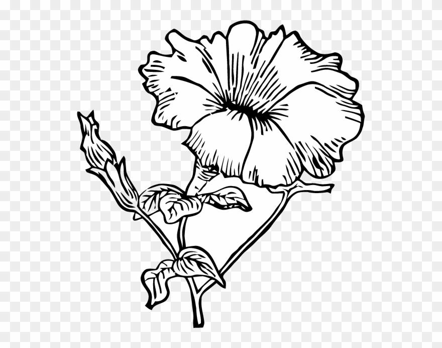 Free vector art clipart picture royalty free stock Ephemeraphilia Free Vector Art Petunia - Petunia Line Art Clipart ... picture royalty free stock