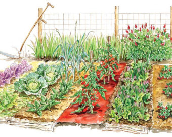 Free clipart vegetable garden png freeuse stock 59+ Vegetable Garden Clipart | ClipartLook png freeuse stock