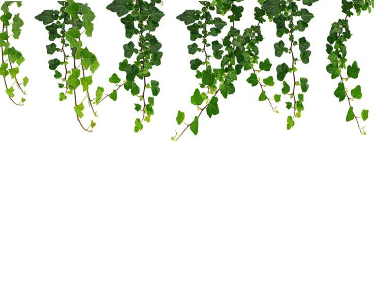 Free vine clipart picture Free Vine Cliparts, Download Free Clip Art, Free Clip Art on Clipart ... picture