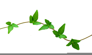 Free vine clipart picture royalty free stock Free Vine Clipart Border | Free Images at Clker.com - vector clip ... picture royalty free stock