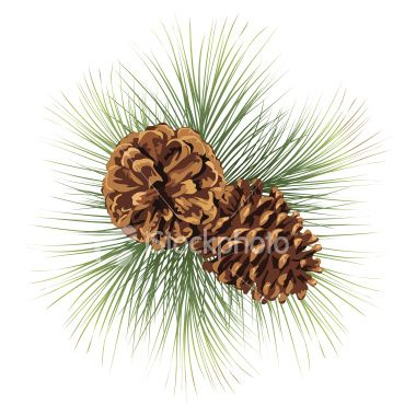 Watercolor pine cones clipart clip art black and white Two pine cones and pine needles. Pine Branches Twig with Pinecones ... clip art black and white