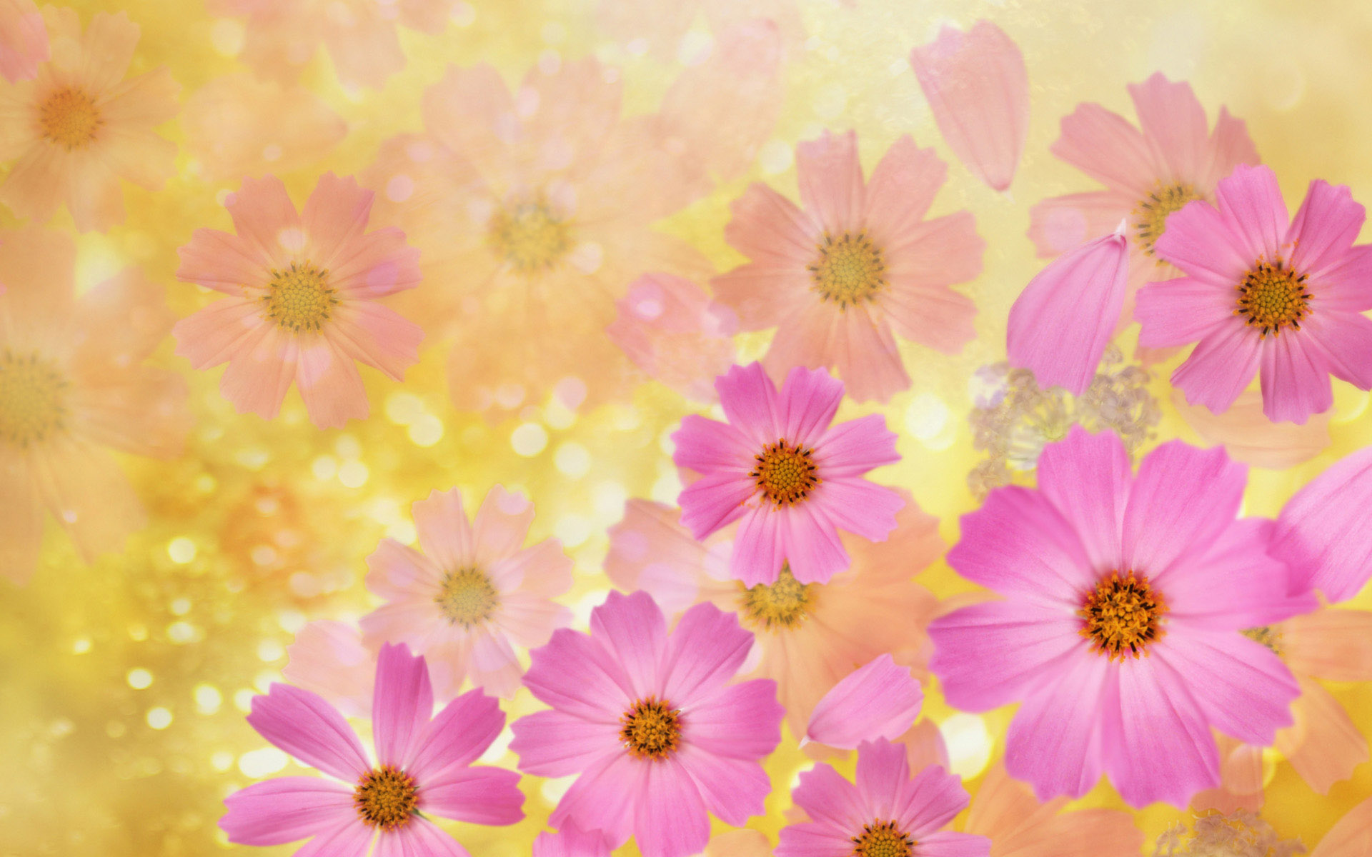 Free wallpaper backgrounds flowers clip art download flower backgrounds | Cosmos flowers Wallpaper | High Quality ... clip art download