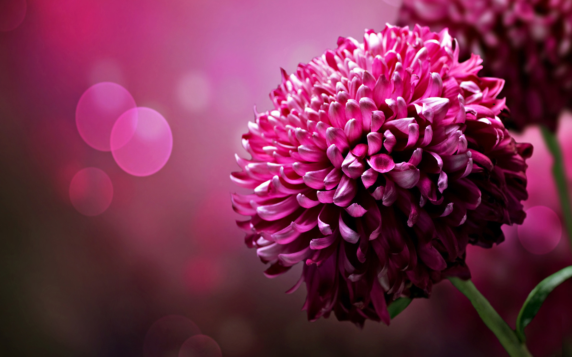 Free wallpaper backgrounds flowers picture royalty free stock Free Pink Flower Wallpaper - WallpaperSafari picture royalty free stock