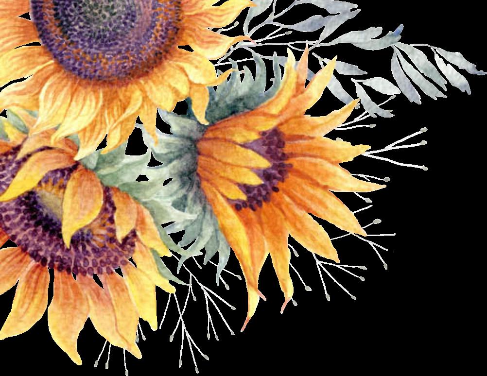 Free watercolor sunflower clipart jpg stock Common sunflower Clip art Image Watercolor painting - sunflower ... jpg stock