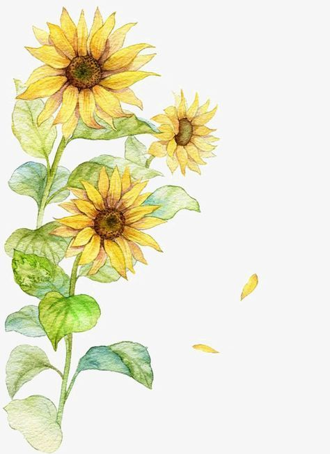 Free watercolor sunflower clipart graphic library Watercolor Sunflower, Watercolor Clipart, Sunflower Clipart ... graphic library