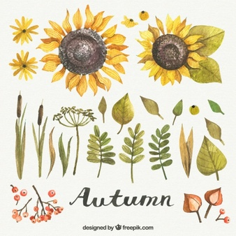 Free watercolor sunflower clipart free download Beautiful Sunflower Vectors, Photos and PSD files   Free Download free download