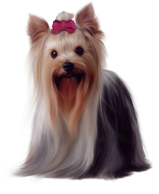 Terrier dog clipart clip art library Painted Yorkshire Terrier PNG Picture | Gallery Yopriceville - High ... clip art library