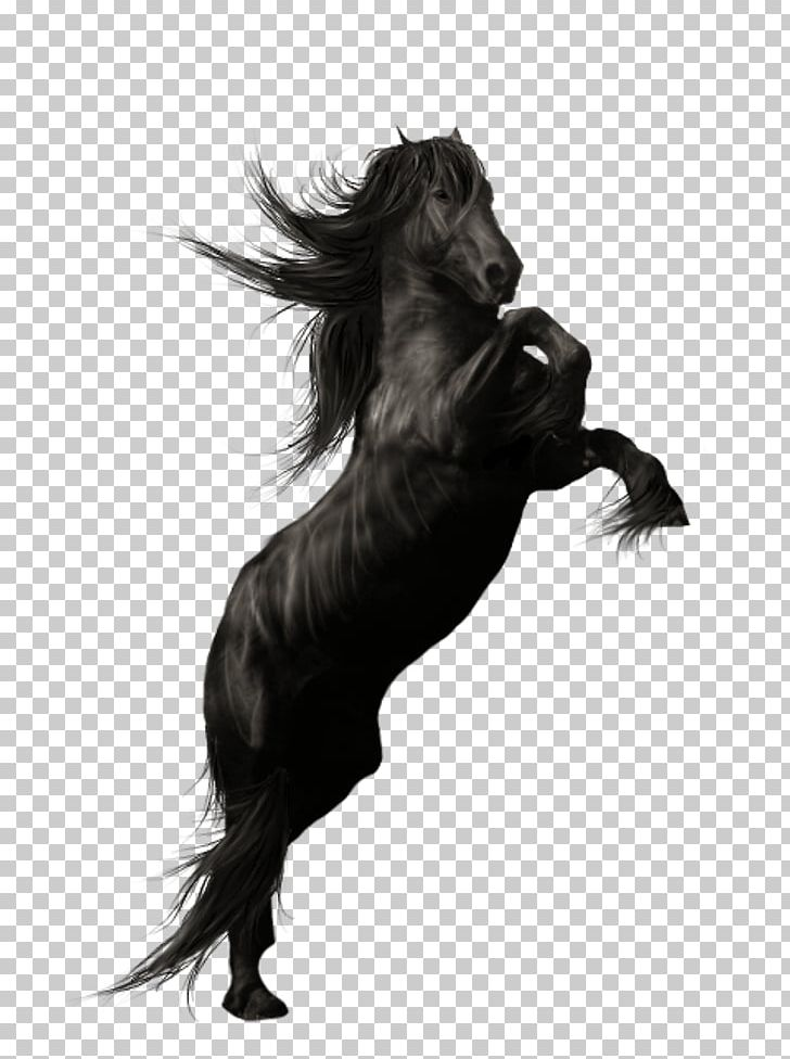 Friesian horse clipart image stock Friesian Horse Andalusian Horse American Quarter Horse Stallion PNG ... image stock