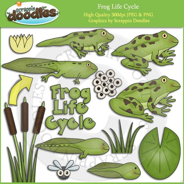 Frog cycle clipart picture stock 1000+ images about Amphibians on Pinterest | Kids songs, Count and ... picture stock