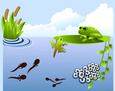Frog cycle clipart svg freeuse stock Articles and pictures about the Life Cycle of a Frog including ... svg freeuse stock