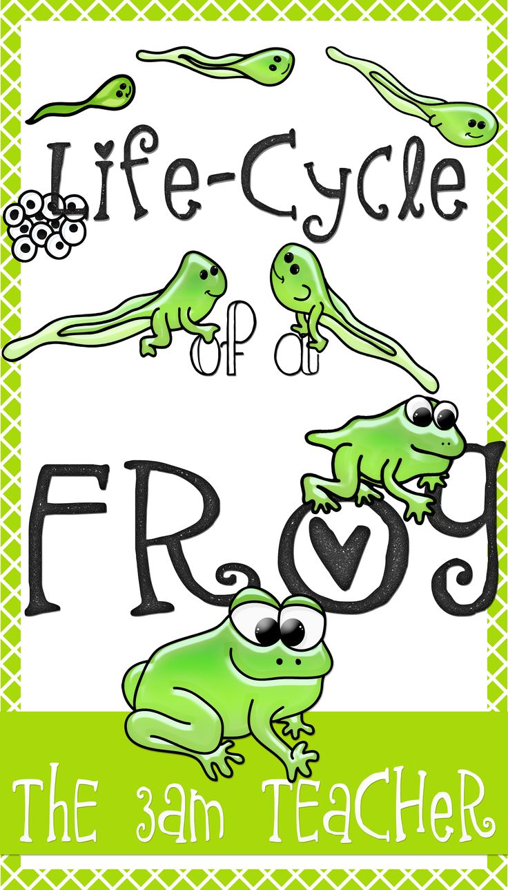 Frog cycle clipart picture library download 17 Best images about Spring: Frogs! Frogs! Frogs! on Pinterest ... picture library download