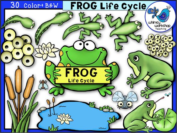 Frog cycle clipart clip library Frog Life Cycle Clip Art - Whimsy Workshop Teaching | New life ... clip library