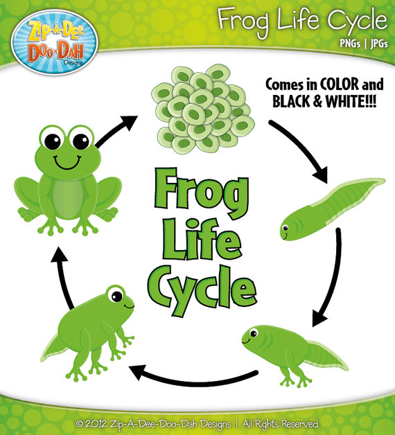 Frog cycle clipart clipart library stock Frog cycle clipart - ClipartFest clipart library stock