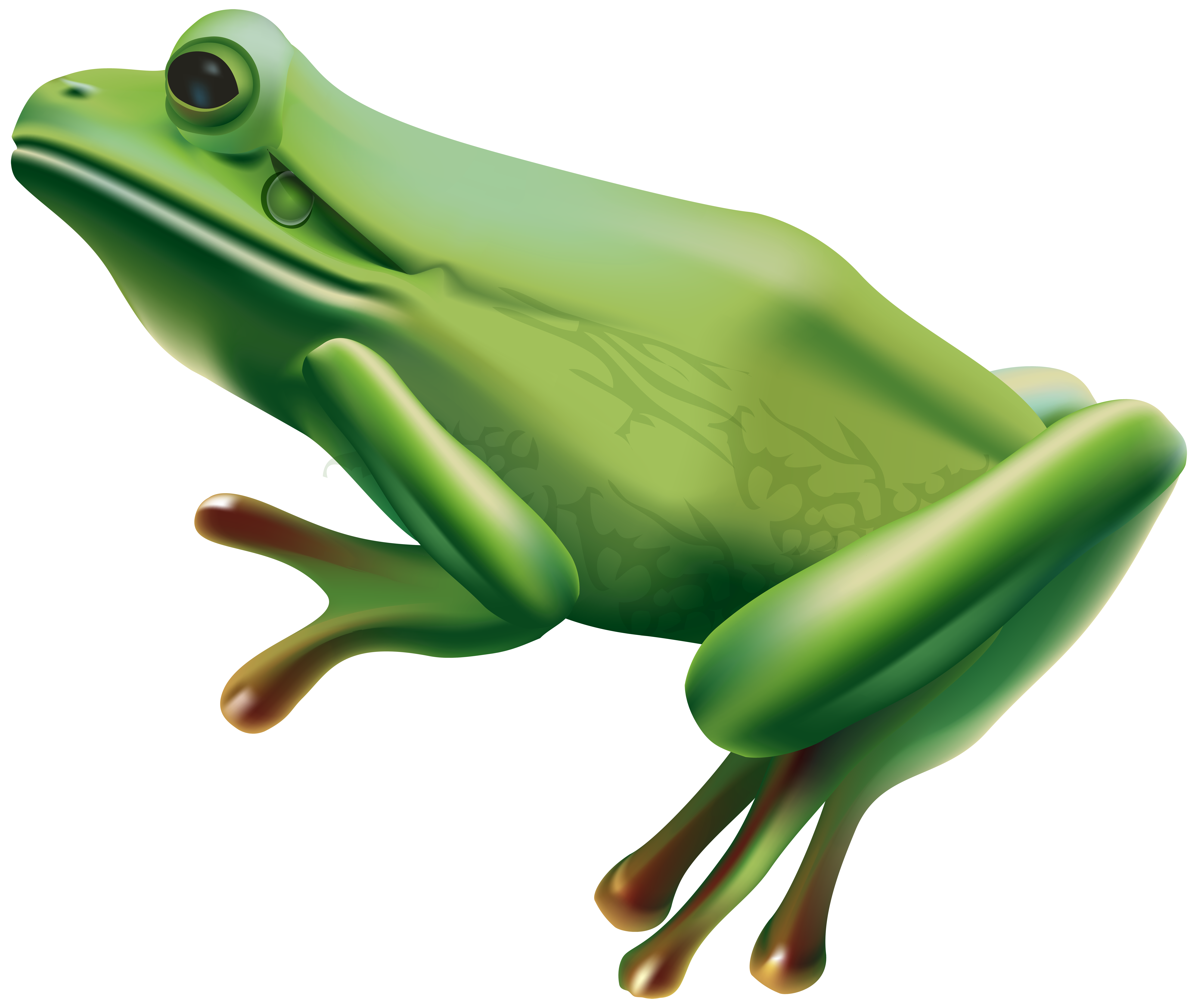 Frog heart clipart free stock Frog PNG Transparent Clip Art Image | Gallery Yopriceville - High ... free stock