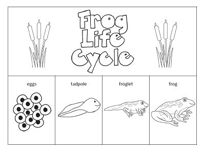 Frog life cycle clipart png transparent download 17 Best ideas about Frog Life Cycles on Pinterest | Life cycles ... png transparent download