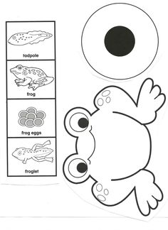 Frog life cycle clipart clip transparent download Frog life cycle and facts | Life cycles, Crabs and Facts clip transparent download