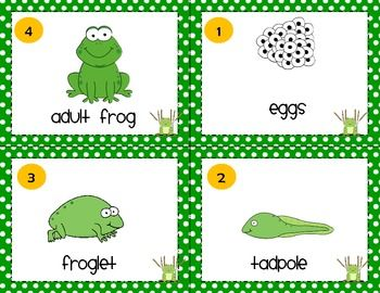 Frog life cycle clipart picture download 17 Best ideas about Frog Life Cycles on Pinterest | Life cycles ... picture download