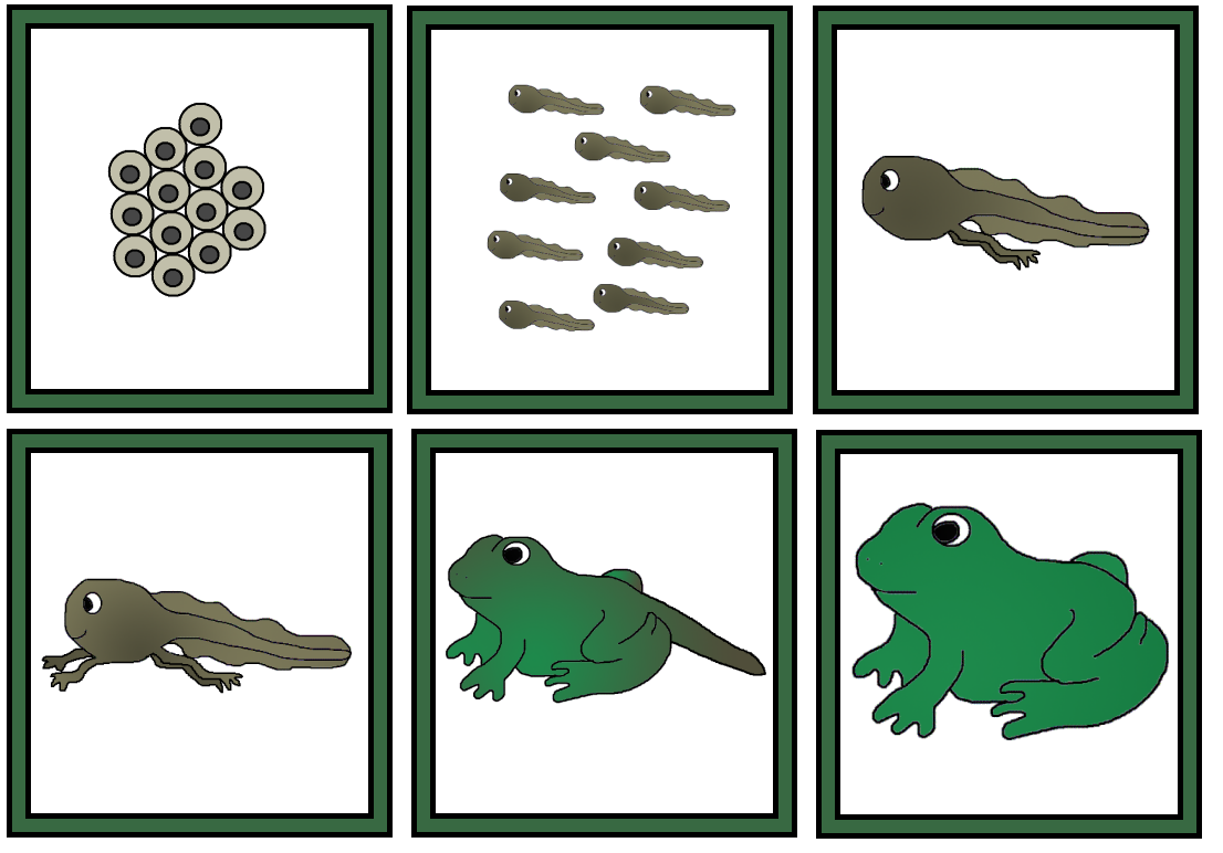Frog life cycle clipart clip art freeuse library Life Cycle Of A Frog - ClipArt Best clip art freeuse library