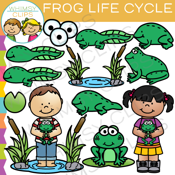 Frog life cycle clipart vector freeuse download Frog Life Cycle Clip Art , Images & Illustrations | Whimsy Clips vector freeuse download