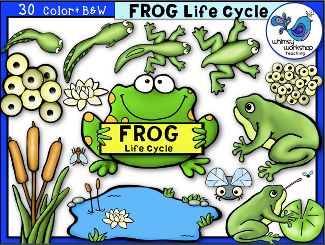 Frog life cycle clipart clipart black and white Life Cycles - Whimsy Workshop Teaching clipart black and white