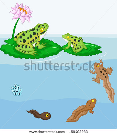 Frog life cycle clipart clip black and white library Frog Life Cycle Stock Images, Royalty-Free Images & Vectors ... clip black and white library