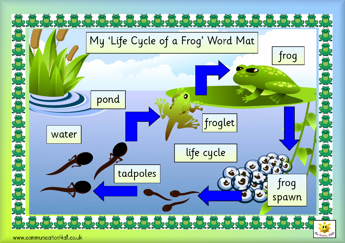 Frog life cycle clipart jpg 74 best ideas about Life Cycles on Pinterest | Butterfly crafts ... jpg