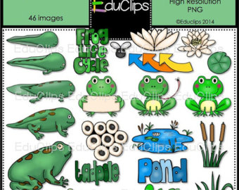 Frog life cycle clipart jpg transparent Frog life cycle | Etsy jpg transparent