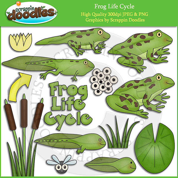 Frog life cycle clipart graphic stock Life Cycle Clip Art graphic stock
