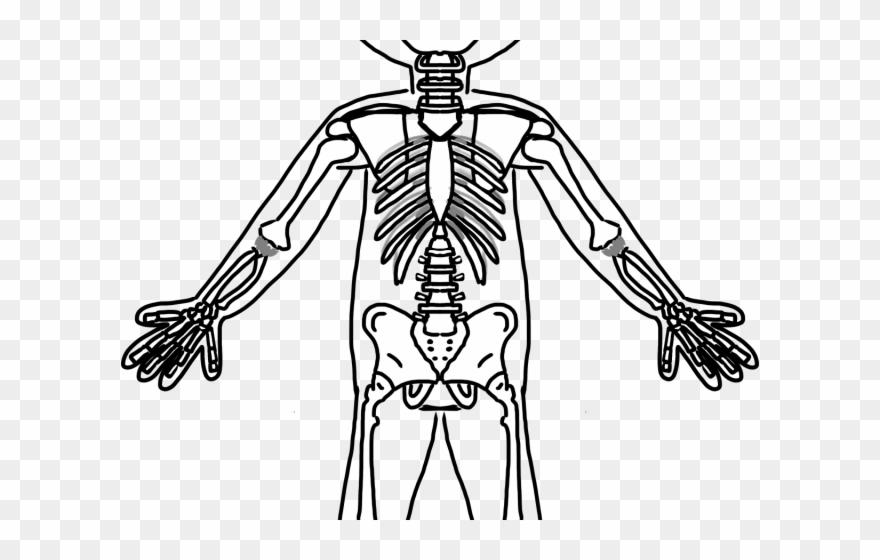 Frog skeleton clipart graphic freeuse Skeleton Clipart Frog - Black And White Skeletal System - Png ... graphic freeuse