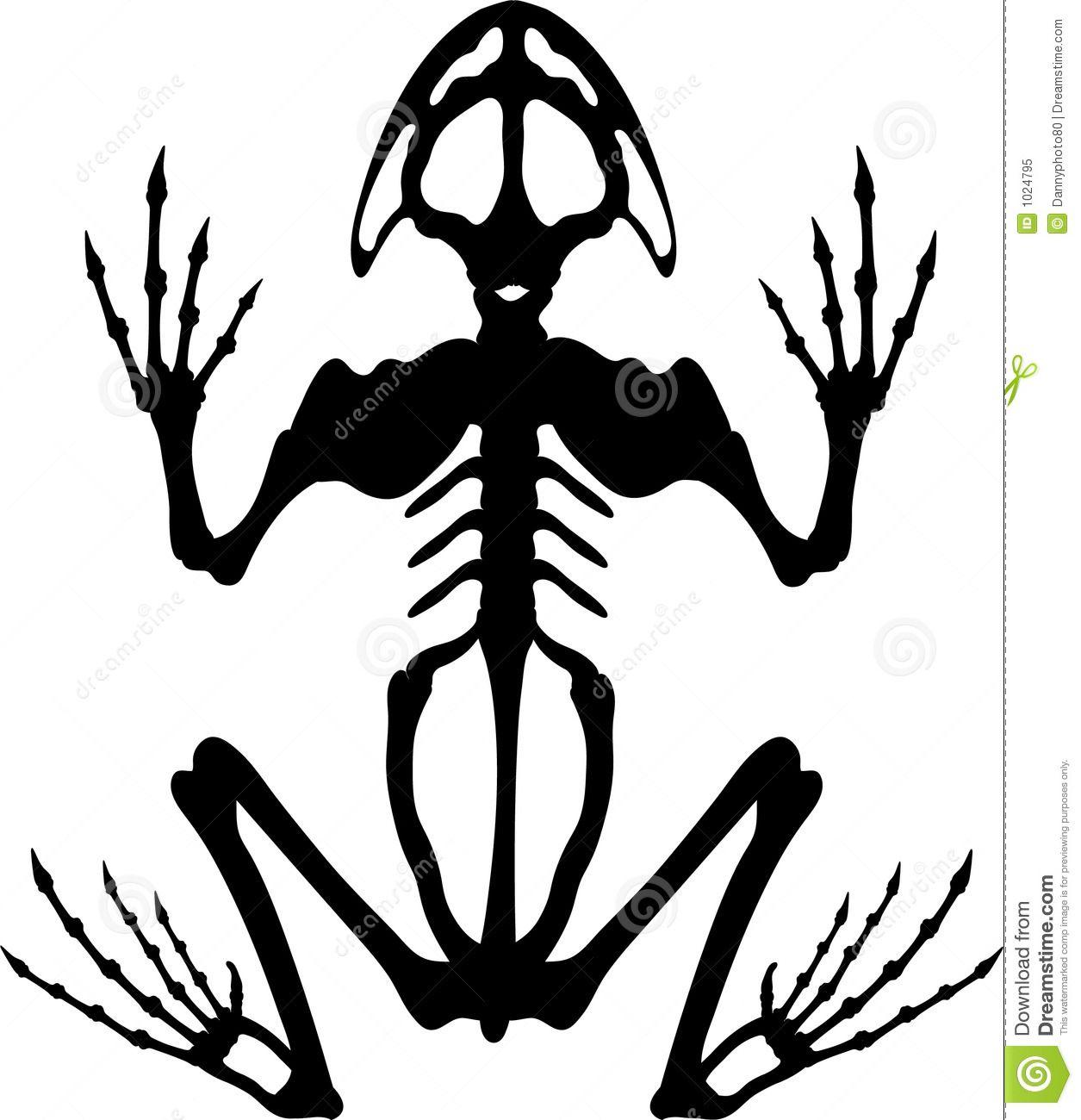 Frog skeleton clipart jpg transparent download Frog Skeleton Royalty Free Stock Photos - Image: 15917488 | Tattoo ... jpg transparent download