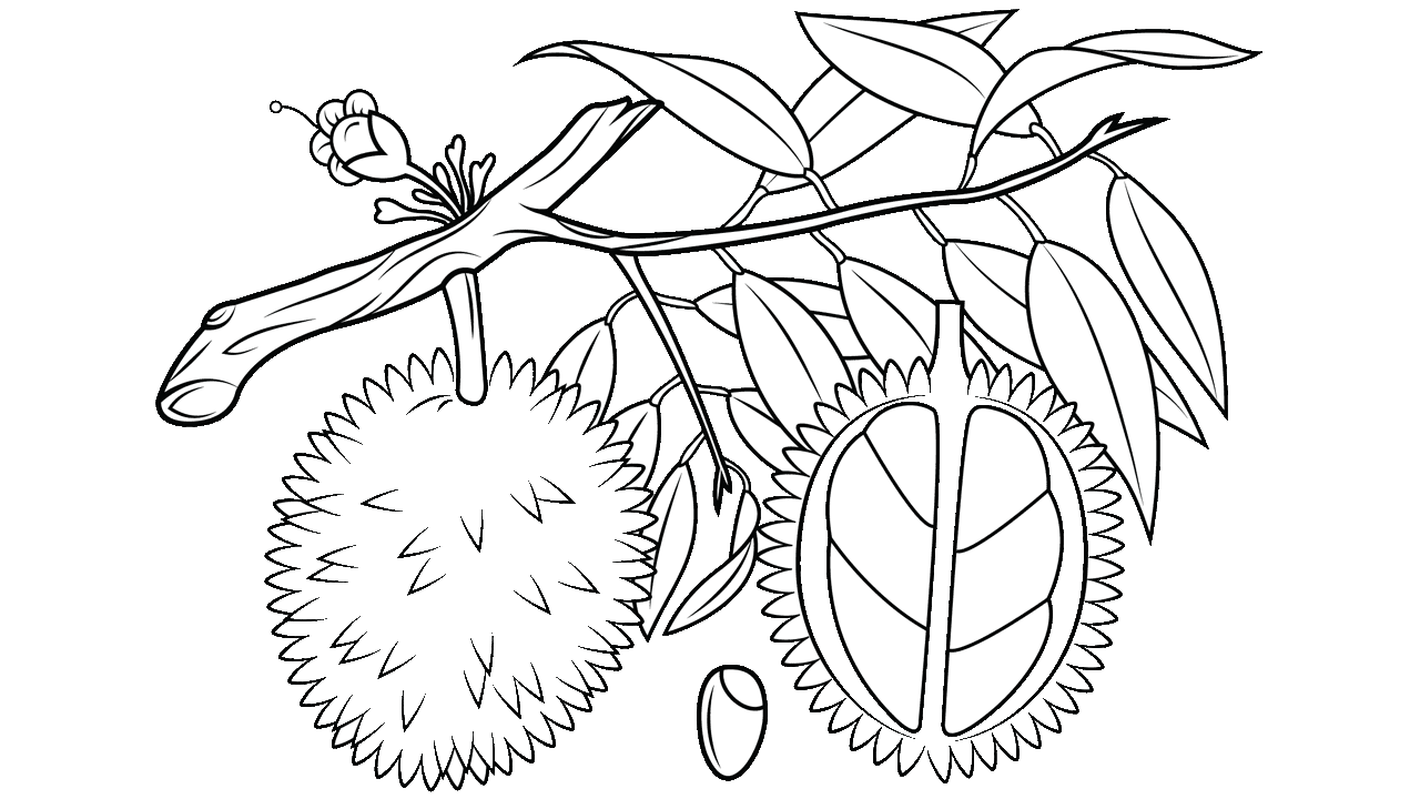 Fruit tree clipart black and white jpg transparent stock 10 Durian Fruit Royalty Free Clipart - Fruit Names A-Z With Pictures jpg transparent stock