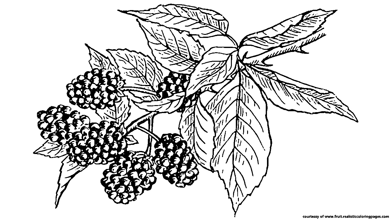 Fruit tree clipart black and white image free stock 28+ Collection of Blackberry Clipart Black And White   High quality ... image free stock