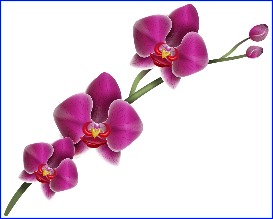 Fun flower clipart svg freeuse download Unbelievable Home Clipart Png Fun Gallery Picture U Flowers Image Of ... svg freeuse download