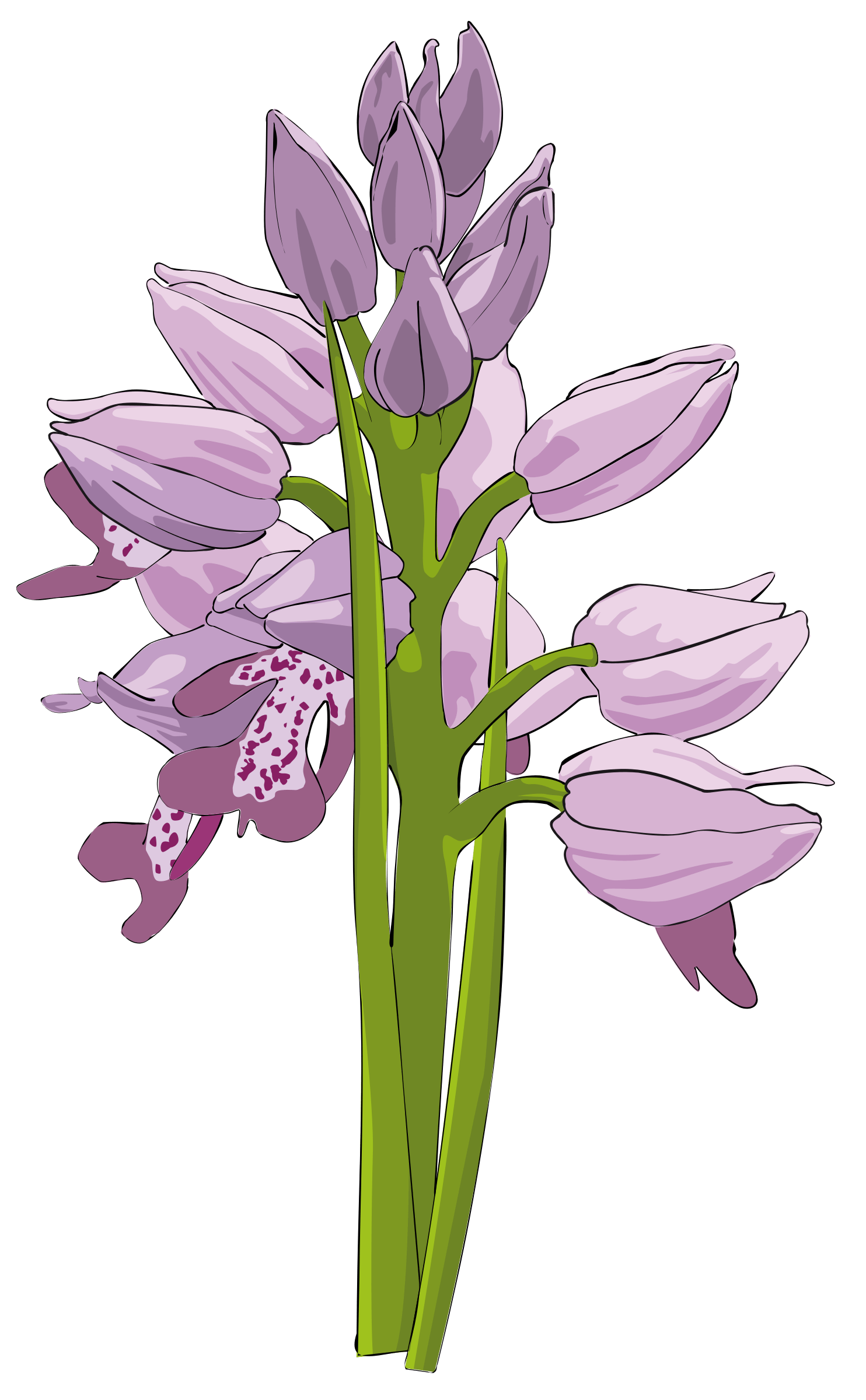 Funeral flower clipart free stock Funeral Flowers Clipart Images - Flower Wallpaper HD free stock