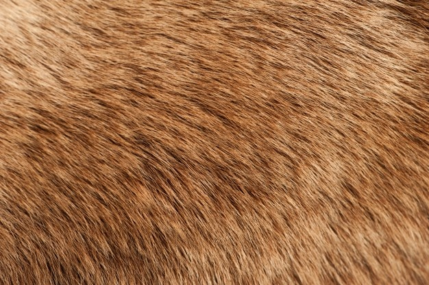 Fur texture clipart image freeuse Fur Texture Vectors, Photos and PSD files | Free Download image freeuse