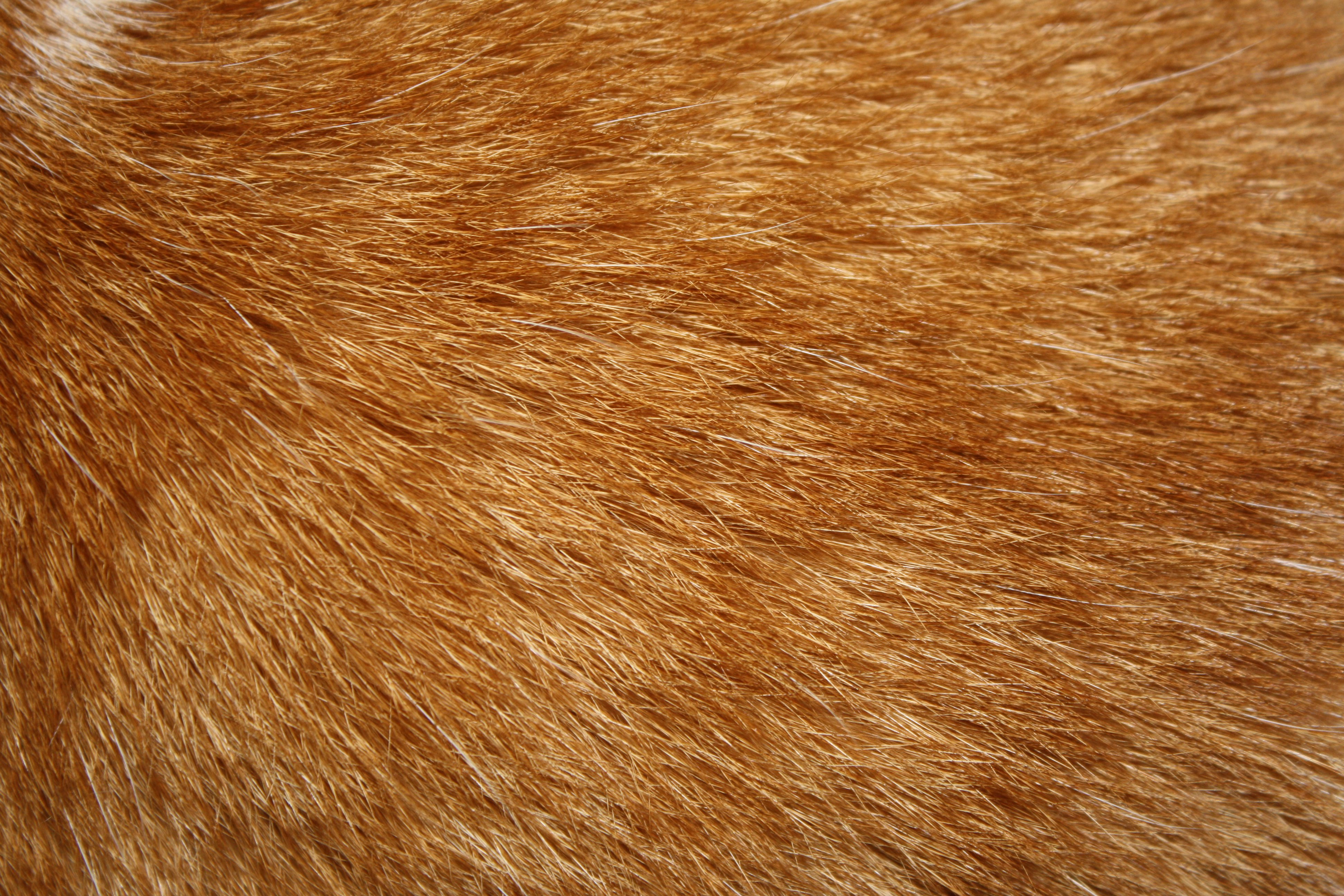 Fur texture clipart jpg freeuse stock Orange Tabby Cat Fur Texture Picture | Free Photograph | Photos ... jpg freeuse stock