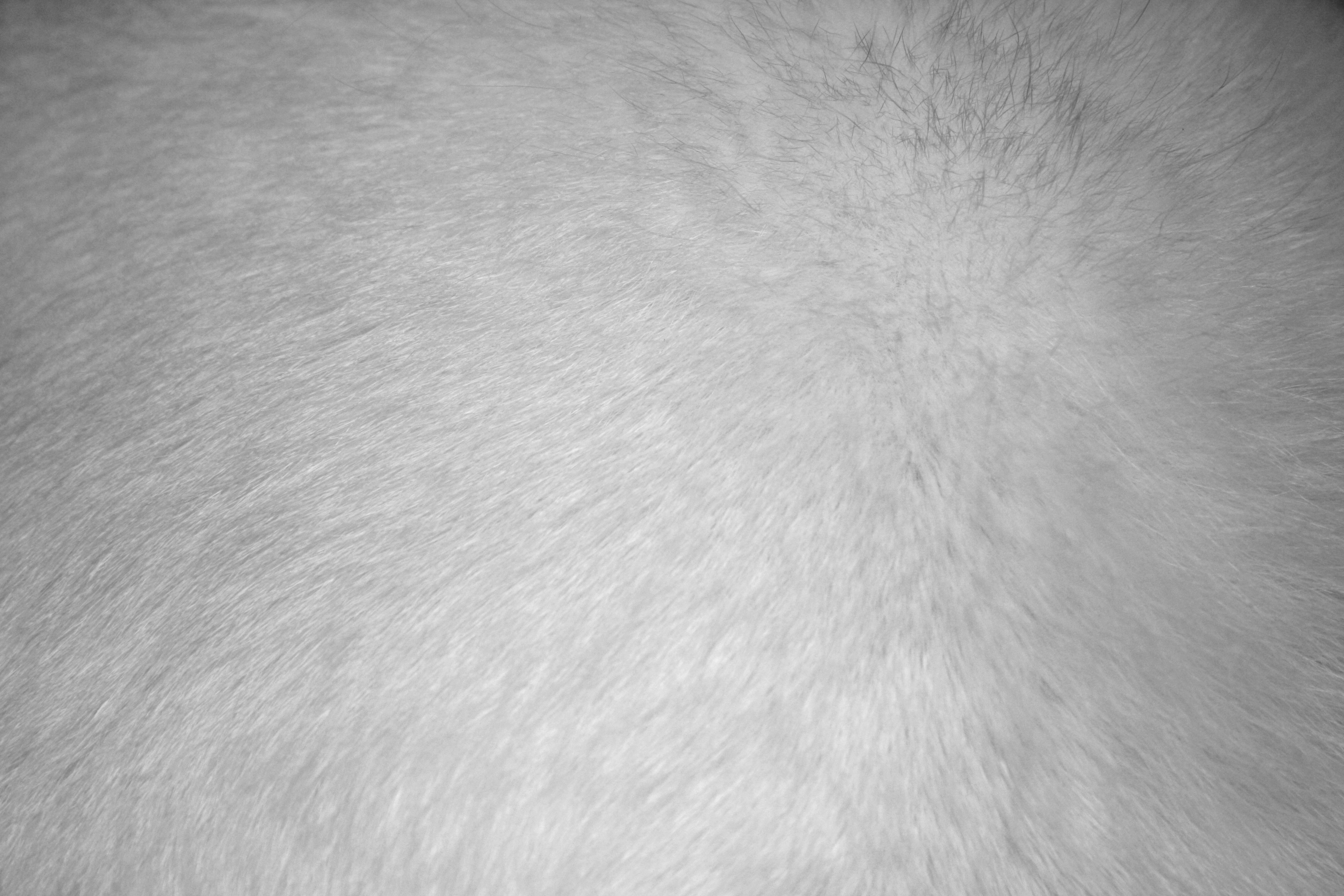 Fur texture clipart clipart free stock White Fur Texture Picture | Free Photograph | Photos Public Domain clipart free stock