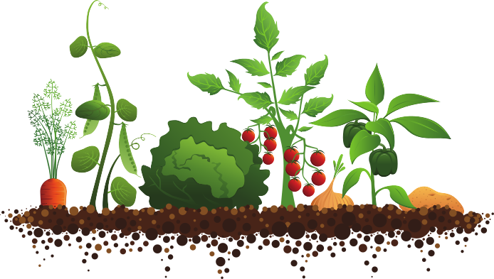 Garden row clipart clipart black and white stock Garden clipart vegetable - ClipartFest clipart black and white stock