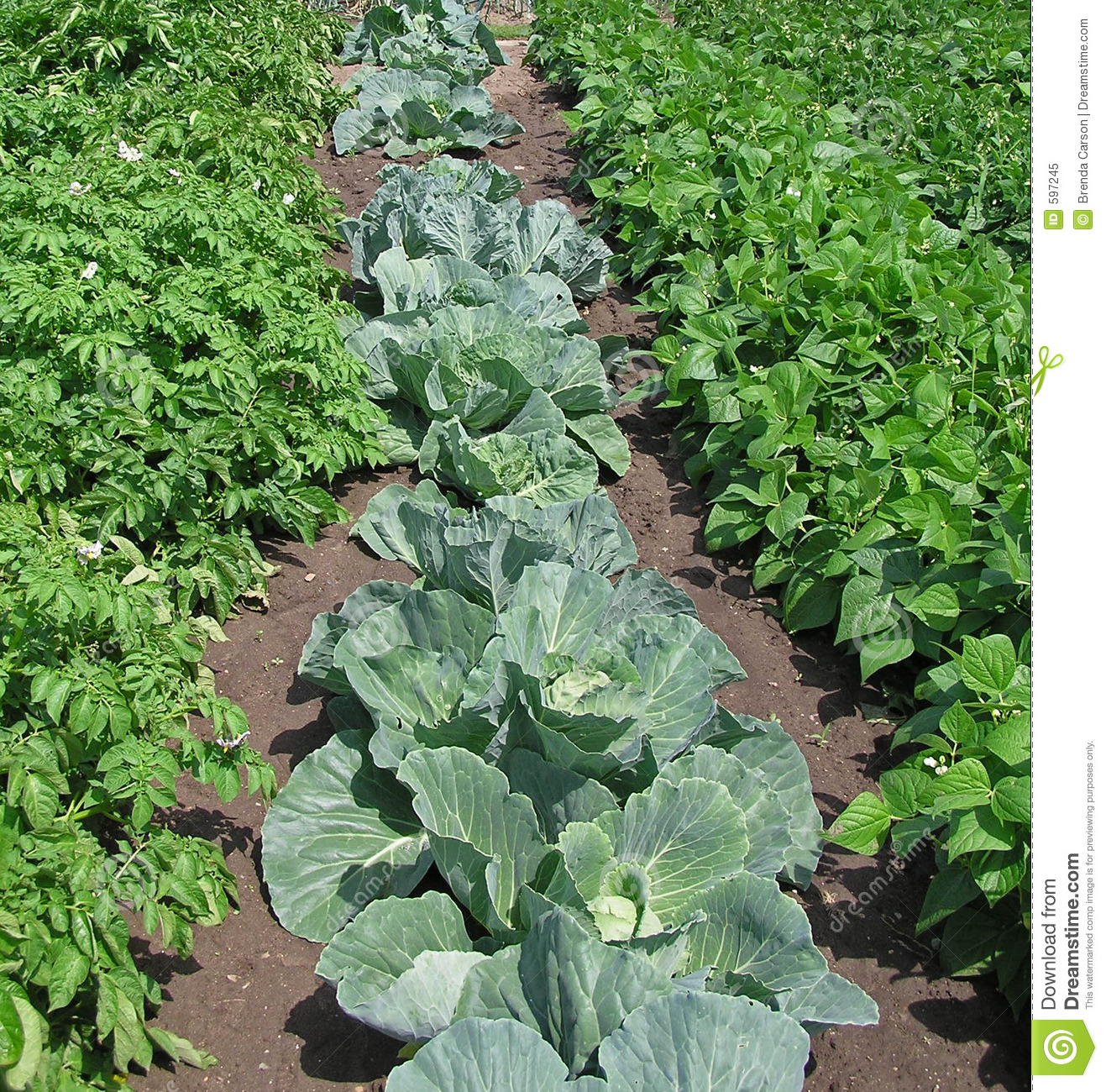 Garden row clipart picture freeuse Vegetable Garden Rows Clipart - Clipart Kid picture freeuse