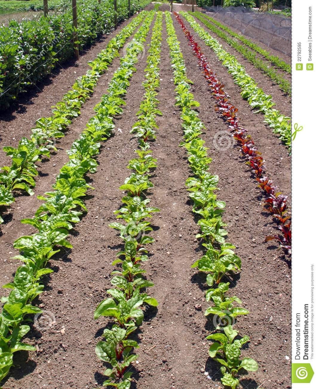 Garden row clipart image download Vegetable Garden Rows Clipart - Clipart Kid image download
