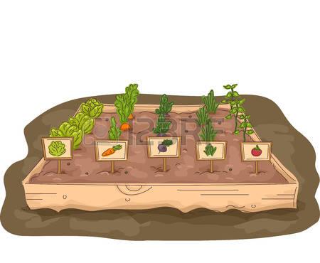Garden row clipart vegetable svg download Vegetable Garden Stock Photos & Pictures. Royalty Free Vegetable ... svg download